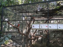 Sidnėjus, Sydney, Australija, Australia, turas, tour, Blue Mountains, Mėlynieji kalnai, Žydrieji kalnai, Colourful Trips, Featherdale Wildlife Park, parkas, laukinės, gyvūnijos
